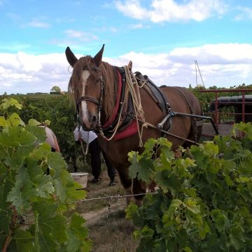 rap dans la vigne